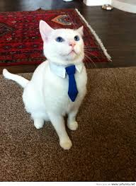 business cat is ready for his first day at work