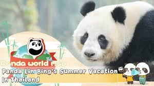 Panda Lin <b>Bing's Summer</b> Vacation In Thailand | iPanda - YouTube