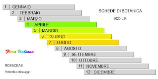 Potentilla collina [Cinquefoglia collinare] - Flora Italiana