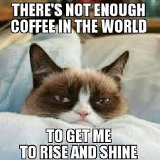 Grumpy cat funny, grumpy cat humor, grumpy cat meme, sarcastic ... via Relatably.com