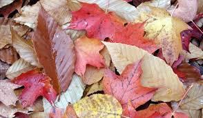 Why Does <b>Fall</b>/<b>Autumn</b> Have Two Names? | Season History | Live ...