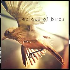 Image result for jealous of birds