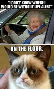 Grumpy cat on Pinterest | Grumpy Cat Meme, Funny and Entertainment via Relatably.com