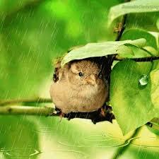 """Résultat de recherche d'images pour """"Gifs de bonjour avec oiseaux"""""""