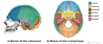 Bones of the <b>Skull</b> - Structure - Fractures - TeachMeAnatomy