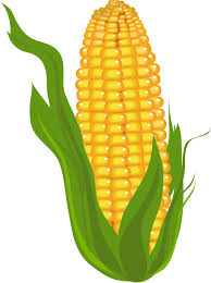 Image result for corn clip art