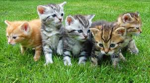 Image result for Big pictures of cute kitties