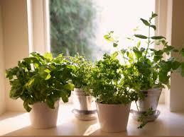 Kitchen Windowsill Herb Garden How To Plant A Windowsill Herb Garden How Tos Diy