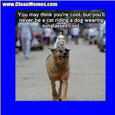 Cat Riding A Dog | Clean Memes – The Best The Most Online via Relatably.com
