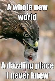 Positive Attitude Mouse memes | quickmeme via Relatably.com