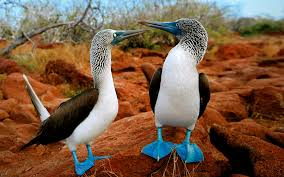 Exotic birds from the Galapagos islands