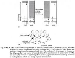 essay on photosynthesis in plants