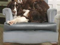 1082 лучших изображений доски «<b>Funny dogs</b>» в 2020 г | Собаки ...