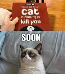Grumpy Cat on Pinterest | Grumpy Cat Quotes, Grumpy Cat Meme and ... via Relatably.com