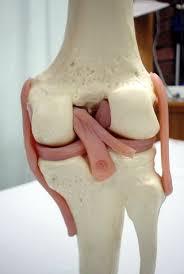 「前十字靱帯損傷」の画像検索結果