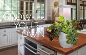 Kitchen Herb Garden Design Garden Design Garden Design With Herb Garden Ideas To Spice Up