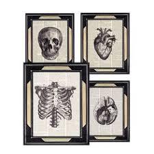 dictionary print human anatomy art prints anatomical skull heart brain ribcage medical science doctor office clinic anatomy office
