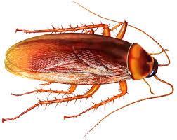Hamam Böceği İlaçlama Firmaları Altunizade