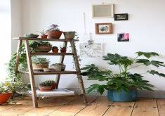 room plants x: attractive indoor plant decor  indoor plants decoration makes your living space more comfortable breathable and luxurious see
