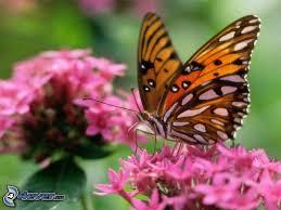 Resultado de imagen de imagenes de mariposas de colores