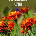 nino arabuli (nino1963557) на Pinterest