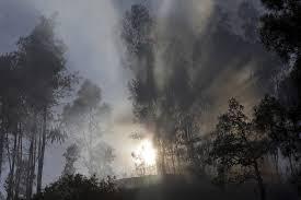 Cerca de 100 operacionais combatem fogo em Castro Verde