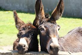 Image result for free images jesus followers bringing a donkey
