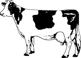 Image result for clipart cow image