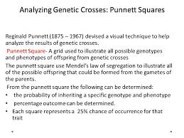 Studying Genetic Crosses  Agenda Take up homework Lesson         SlidePlayer Analyzing Genetic Crosses  Punnett Squares Reginald Punnett                 devised a visual