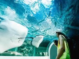 The 5 best destinations for aquariums | Booking.com