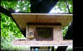 images about Squirrels on Pinterest   Squirrel Feeder       images about Squirrels on Pinterest   Squirrel Feeder  Squirrel and Birdhouses