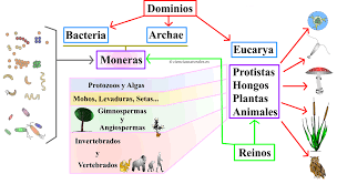 Resultado de imagen de dominios biológicos