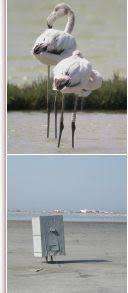 <b>Flamingo</b> Atlas - ©2006, Tour du Valat