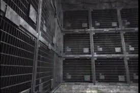 Image result for dulce underground base human cage