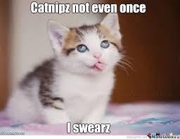 Catnip Not Even Once by hazzydog - Meme Center via Relatably.com