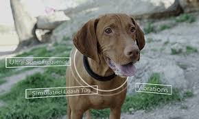 Connected Collar tracks <b>pets</b>, <b>lets</b> owners 'talk' to them and stops ...