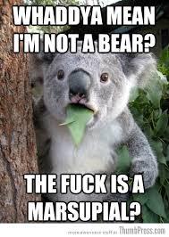 """Best Of """"Surprised Koala Bear"""" Meme (25 Pics) via Relatably.com"""
