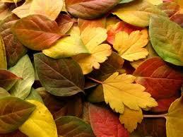 Resultado de imagem para Equinócio de outono
