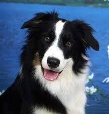 El diario de un perro Images?q=tbn:ANd9GcTMTn_WFPBLuTsvmZunFVbSNnTUCjcpekIfW3Jn9-No3ZacKS2DFQ