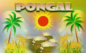 festivals pictures images com page  pongal greetings graphic
