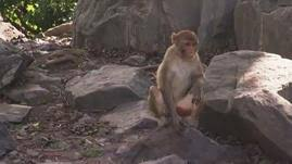 The Human <b>Spark</b> | <b>Monkey</b> See, <b>Monkey</b> Take | PBS LearningMedia