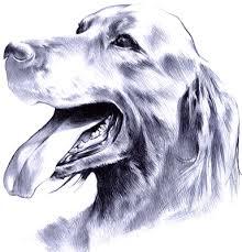 Resultado de imagen para perro dibujo a lapiz