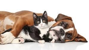 """Résultat de recherche d'images pour """"Affichage j'aime les animaux"""""""