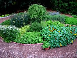Image result for growing herbs