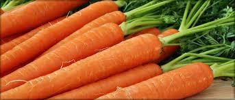 Risultati immagini per carota