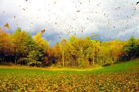 Afbeeldingsresultaat voor herfst bomen