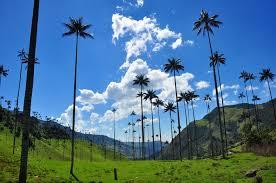 Резултат слика за colombia cocora valley