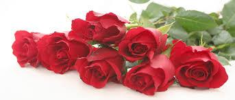 Image result for rose essential oil