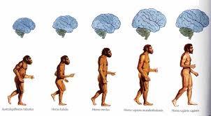 write an essay on evolution of man   essayhuman evolution chart exhibit e amotid com