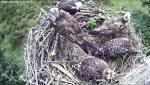Man found guilty of recklessly disturbing ospreys at Bassenthwaite